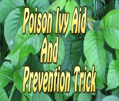 Poison Ivy Cure All