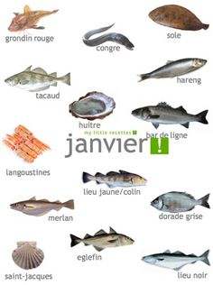 Produits de saison janvier, fruits, légumes, poissons, fromages - My Little Recettes Nutrition Drinks, Nutrition Tips, Winter Food, Healthy Life, Food And Drink, Sea Food, Utensils, Notes, French