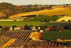 Barossa Valley - South Australia