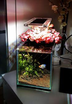 Aquascaping, Betta Fish Tank, Fish Tanks, Classroom Pets, Nano Cube, Mini Aquarium, Nano Tank, Fishing World, Aquarium Design