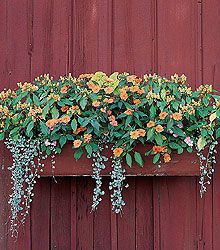 Colorful plants for shade container