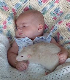 I can attest, this baby is safer with this rat than most cats