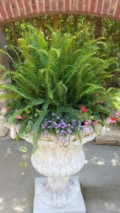 Container Gardening Ideas Kimberly Queen Ferns are great in sun or shade. See our website for more great combinations! Fern Planters, Potted Ferns, Outdoor Planters, Flower Planters, Flower Pots, Outdoor Gardens, Container Flowers, Container Plants, Succulent Containers