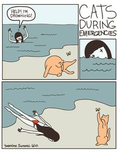 This would be my cat. Seriously. let the hand that feeds you die while you chase a bug and lick your balls.