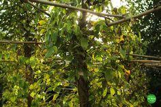 Das ist da wo der Pfeffer wächst. Lokale Spezialität in Kep: Krabbe mit Pfeffersauce. Hm :-) Mehr über Kambodscha gibts hier: http://ift.tt/2bl3yfo