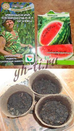 Посадка семян капусты, арбузов и огурцов Фото с подросшей рассадой томатов, перцев и баклажанов.