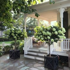 Shor Home instagram interior design - architecture - gorgeous hydrangea topiaries - beach house decor