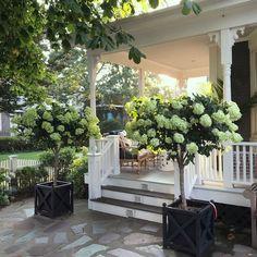 Shor Home instagram interior design - architecture - gorgeous hydrangea topiaries - beach house decor