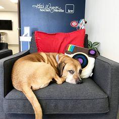 The KWSM weekend crew is hard at work! #agencydoglife #canwegohomenow