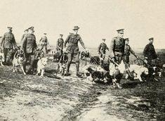 Des chiens de guerre à l'entraînement.