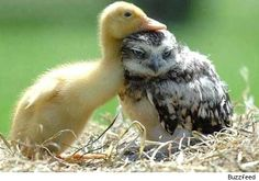 Your a funny looking duck, but I love you anyway. - Imgur