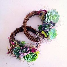 Succulent Wreath by VerticalFlora on Etsy