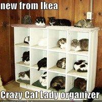 new from Ikea  Crazy Cat Lady organizer