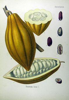 il genoma diploide di Theobroma cacao è costituito da circa 28 mila geni, localizzati su 20 cromosomi. Il genoma di Homo sapiens ha invece circa 23 mila geni su 46 cromosomi. Attraverso il sequenziamento del DNA, è stato poi possibile identificare 84 geni coinvolti nella sintesi dei lipidi, dei flavonoidi e dei terpeni. Il genoma diploide di Fragaria vesca ha circa 35 mila geni, localizzati su 14 cromosomi.