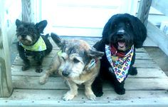 On the blog- These rescues love their mom!