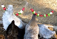 Fresh Eggs Daily: Edible Christmas Garlands