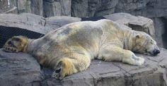 "Polar Bear ""Arturo"" Dies :("