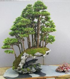 Bonsai - I wonder if I could build a fake version of this?  It's SO pretty! - #bonsai #build #could #fake #it39s #pretty #version #wonder Bonsai, Aquarium, Cactus Plants, Succulents, Aquarius, Fish Tank