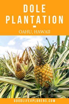 Hawaii Vacation Tips: Dole Plantation on Oahu