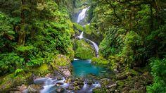 La forêt humide (rain forest) du Parc national du Fiordland reçoit jusqu'à 9 mètres de pluie par an. Ces fortes précipitations nourrissent d'innombrables rivières et cascades, comme ici, celle de Makay.
