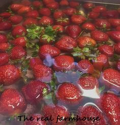 Stupid easy chia seed and strawberry jam. Fast, fresh, all natural, sugar free, delicious homemade freezer jam Diabetic Recipes, Healthy Recipes, Healthy Food, Freezer Jam, How To Make Jam, Growing Tomatoes, Fruit Garden, Strawberry Jam, Canning Recipes