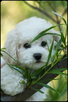 hello from the garden...my heart just melted:-) :-) :-) :-)