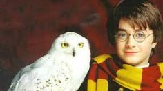 Image result for harry potter with hedwig