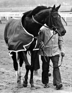 Ruffian - I wasn't even born when she raced and every time I see her I cry. I hope to have even half as much determination, courage, and heart as this horse.