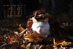 かご猫 〜cafe:2016年11月カレンダー〜  夕暮れの 西陽くるまる 落ち葉焚き…霜月