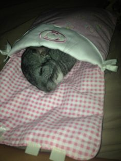 OMG this is too cute. I wish my chinchillas would snuggle up like this in their snuggle sacks. Super Cute Animals, Cute Funny Animals, Cute Baby Animals, Animals And Pets, Chinchilla Cute, Funny Hamsters, Cute Animal Pictures, Exotic Pets, My Animal