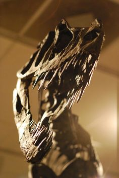 Twitter / Laelaps: The business end of Ceratosaurus ...