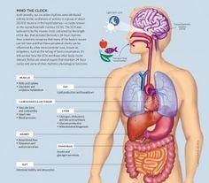 infographic human body pancreas organs