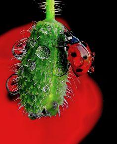lady bug and drops by tugba kiper, via 500px