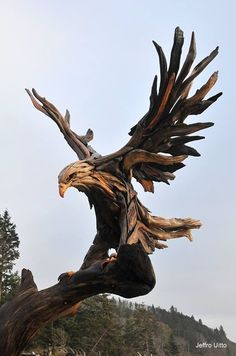 New eagle project by Jeffro Uitto