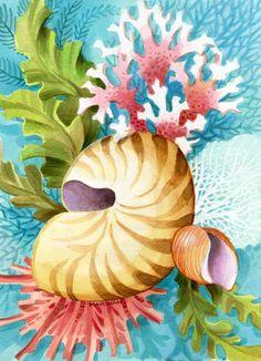 """Shells & Corals II"" by Johnny Karwan"