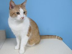 Meet Froggers! He is a sweet and loving fella that can't wait to find his new best friend in life. This little man is looking for a place to call his own and a companion to spend lots of time with. Froggers would enjoy playing with you, napping in the sun and chatting about his day. Froggers came to OHS with his pal, Bigs (201750), and would love to go home with him. His handsome face and endearing personality will capture your heart and make you ask yourself how you ever lived without h...