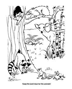 pond habitat coloring pages - photo#11