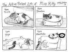 The Action-Packed Life of Miss Kitty #cats #kittens #comics