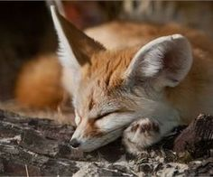 19 Cute Animal Pics for Your Friday - Love Cute Animals