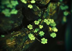 Image about nature in Natura by ▲Silvestre▲ on We Heart It Irish Eyes Are Smiling, In Natura, Irish Blessing, Walk In The Woods, Enchanted, Garden Plants, Flower Gardening, Flower Power, Woodland