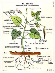 Items similar to French School Poster Botanical Print La Plante Garden Plant on Etsy Basic French Words, Mediterranean Plants, Eco Garden, French School, Plant Information, School Posters, Vintage School, Science Biology, Learn French
