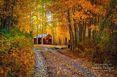"""""""Sierra Fall Creek Cabin"""" I was surprised and so glad to find this cute little cabin nestled within some Golden Aspens while hiking and crossing a small creek off of Hwy 395 south of Mammoth a couple days ago. Photo by Susan Taylor Fine Art Photography"""