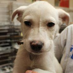Adopt Me: V34424