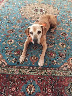 Cucci Resuce Dog | Pawshake