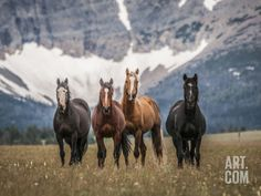 Horses Along the Rocky Mountain Front, Montana. Photographic Print by Steven Gnam at Art.com