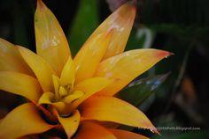 Wordless Wednesday #129- Waxing Flowers