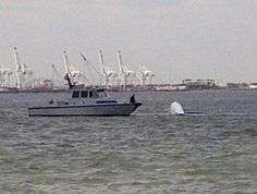 """Saved by the Jacket (NY): Sailboat overturns by Statue of Liberty; man rescued. """"He was wearing a life jacket."""""""