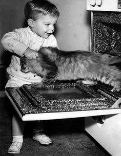 Here kitty kitty ...