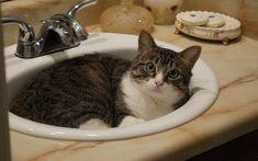 Cat facts about quirky cat behaviors Funny Cat Jokes, Funny Cat Fails, Funny Cats And Dogs, Funny Cat Videos, Cute Animal Pictures, Funny Cat Pictures, Dog Pictures, Cat And Dog Videos, Cat Bath