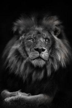 The King II by Art X